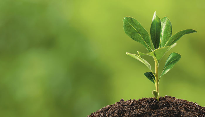 Healthy Soil Holds Benefits for Agriculture and the Environment